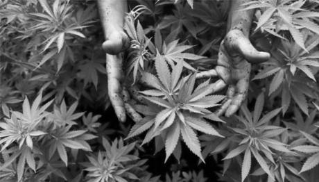 Анонс прес-брифінгу пацієнтських організацій щодо законодавчого врегулювання канабісу для науки та медицини: «Ми не можемо більше терпіти!»